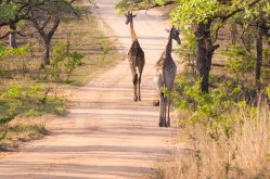 DearWorldTraveler - South African Safari