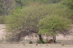 DearWorldTraveler - South African Safari