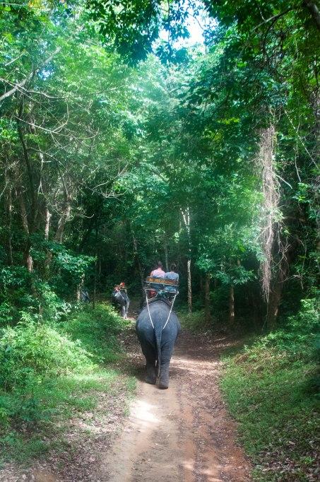 DearWorldTraveler - Elephant Trekking in Phuket