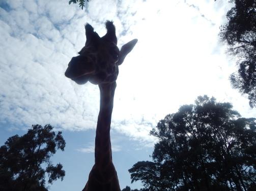 DearWorldTraveler - Nairobi: Fearless Solo Travel